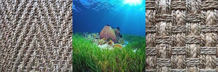 ковры из морских водорослей