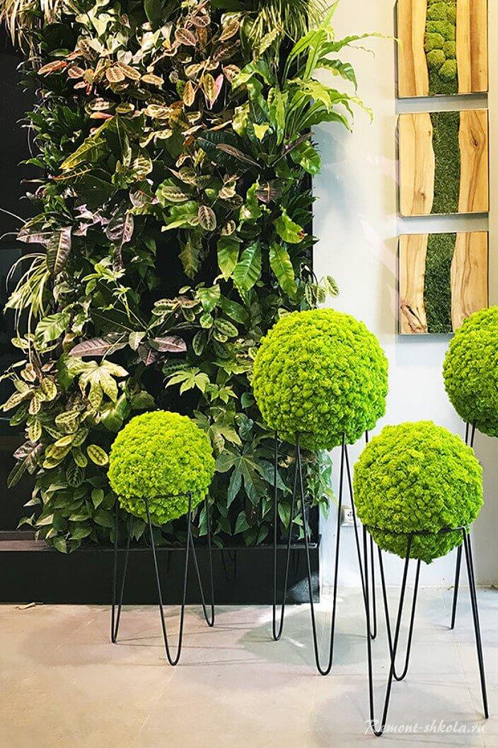 Зелень в квартире